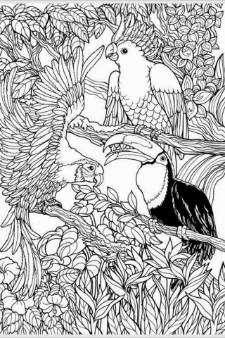 free-coloring-pages-adult-e1450115744432-320x480